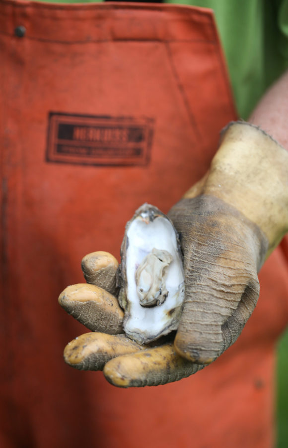 How to Shuck an Oyster-13877