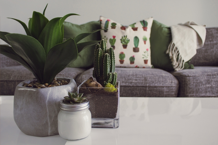 cactus cactus plant contemporary 1005058 735x490 - 5 Things Every Home Needs To Have