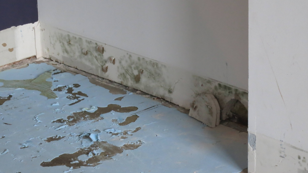 3dEng 1024x575 - 5 Causes Of Mold In Your Home