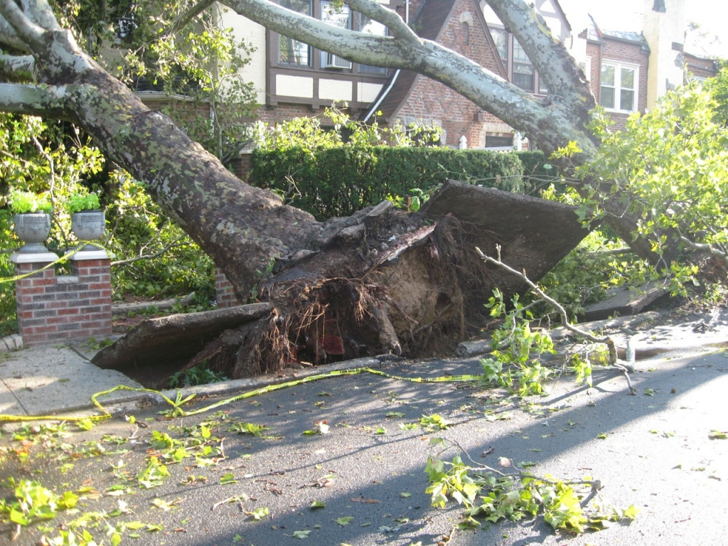 tree 14340 1024x768 - Common Things That Can Cause Damage To Your Home and How To Avoid Them
