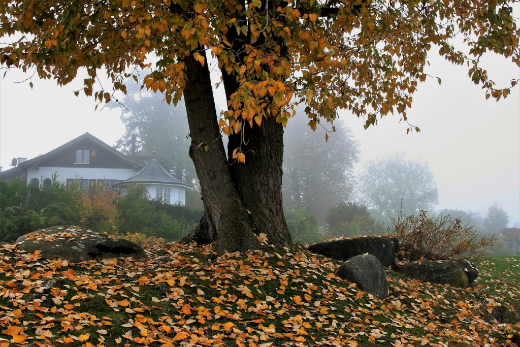 house 3144874 1920 1024x683 - Your Fall Home Maintenance Checklist