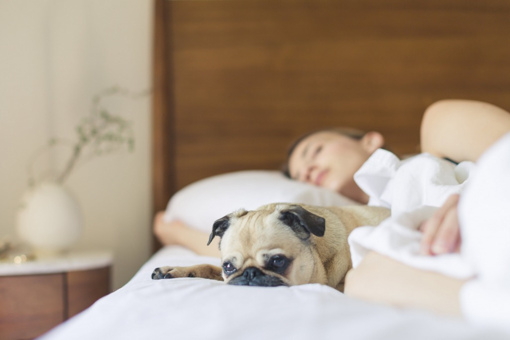 bed bedroom cute dog 545016 1 1024x683 - Is Your Bedroom Set Up For Sleeping?